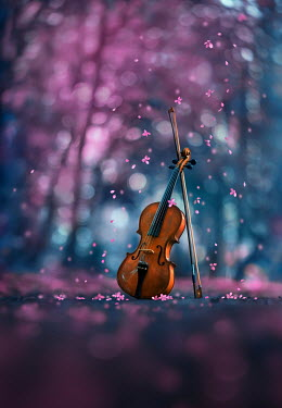 Ashraful Arefin VIOLIN AND BOW WITH TREES IN BLOSSOM Musical Instruments