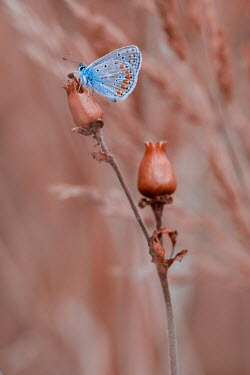 Magdalena Wasiczek close up of blue butterfly on brown plant Insects