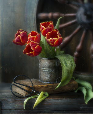 Andreeva Svoboda RED TULIPS WITH SCISSORS AND WOODEN WHEEL Flowers