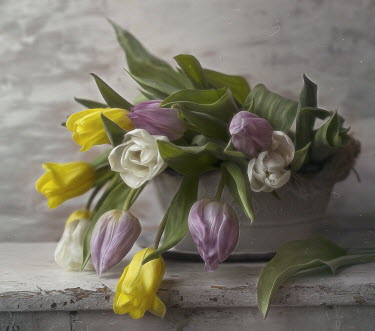 Andreeva Svoboda CLOSE UP OF TULIPS ON WHITE WOODEN TABLE Flowers