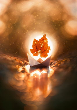 Ashraful Arefin SUNLIT AUTUMN LEAF IN PAPER BOAT Miscellaneous Objects