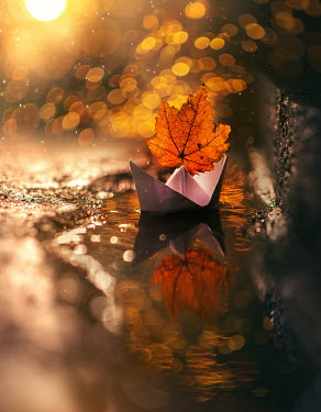 Ashraful Arefin AUTUMN LEAF IN PAPER BOAT FLOATING IN PUDDLE Miscellaneous Objects