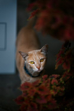 Ashraful Arefin CLOSE UP OF GINGER CAT BY PLANT INDOORS Animals