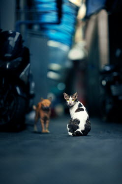 Ashraful Arefin TWO STRAY CATS IN OUTDOORS IN ALLEYWAY Animals