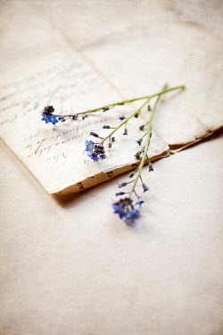 Miguel Sobreira Flowers and handwritten letter
