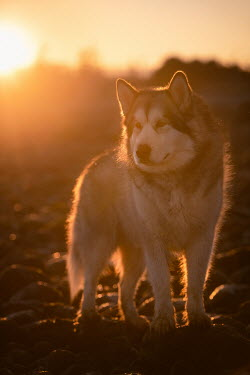 Viktoria Haack CLOSE UP OF WOLF IN SUNLIGHT Animals