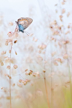 Magdalena Wasiczek butterfly sitting on summer grasses Insects