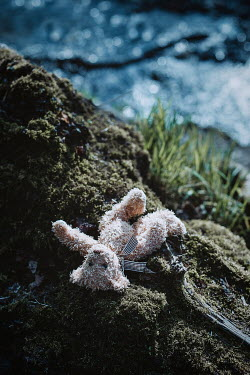 Shelley Richmond WET TEDDY BEAR LYING BY RIVER Miscellaneous Objects