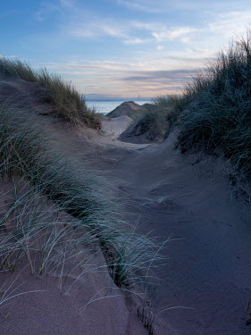 David Baker PATH IN SAND DUNE AT DUSK Seascapes/Beaches