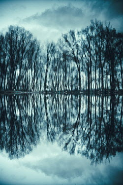 Magdalena Russocka silhouetted trees by river