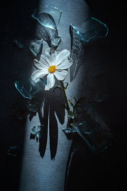 Magdalena Wasiczek white flower and broken glass Flowers