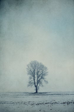 Magdalena Russocka single tree in snowy field