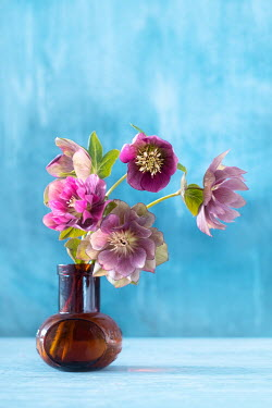 Magdalena Wasiczek PINK FLOWERS IN BROWN BOTTLE Flowers