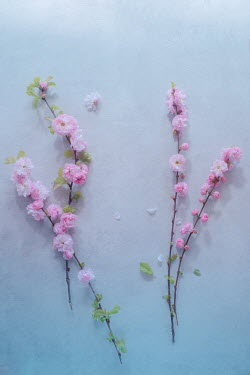 Magdalena Wasiczek twigs with pink blossoms Flowers