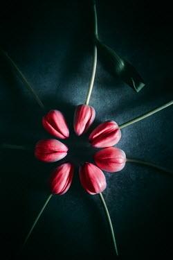 Magdalena Wasiczek CIRCLE OF RED TULIPS Flowers
