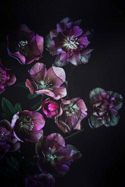 Magdalena Wasiczek PURPLE FLOWERS FLOATING IN WATER Flowers/Plants