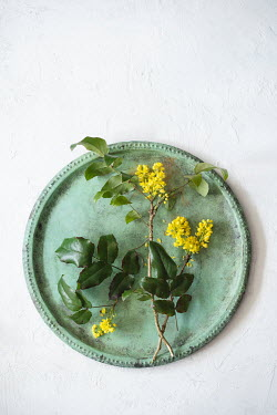Magdalena Wasiczek YELLOW FLOWERS ON GREEN TRAY Flowers