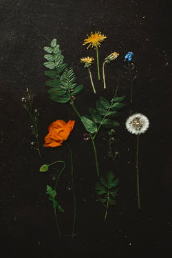 Shelley Richmond COLLAGE OF DANDELIONS POPPY AND FORGET-ME-NOT Flowers