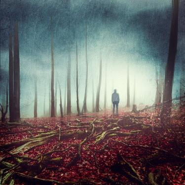 Dirk Wustenhagen SILHOUETTED MAN STANDING IN WINTRY FOREST Men