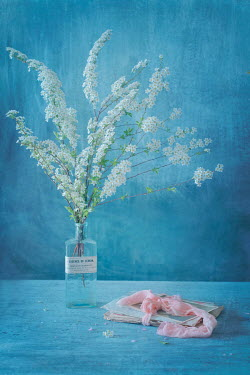 Magdalena Wasiczek white blossom and old letters on table Flowers