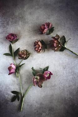 Magdalena Wasiczek PINK FLOWERS ON FLOOR FROM ABOVE Flowers