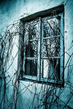 Magdalena Russocka overgrown window of old cottage house