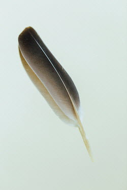 Shelley Richmond BROWN FEATHER Miscellaneous Objects