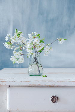Magdalena Wasiczek Vase of white flowers on wooden table