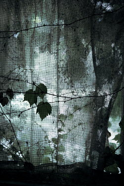Miguel Sobreira WINDOW AND LACY CURTAIN OVERGROWN WITH LEAVES Building Detail