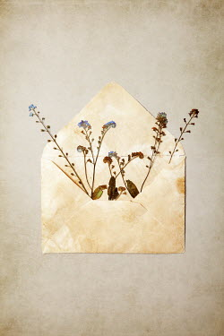 Miguel Sobreira DRIED FLOWERS IN OPEN ENVELOPE Flowers