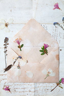 Miguel Sobreira PRESSED FLOWERS ON OLD LETTERS AND ENVELOPE Flowers