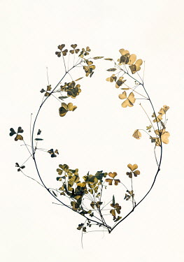 Sally Mundy CIRCLE OF TWIGS WITH DRIED PETALS Flowers