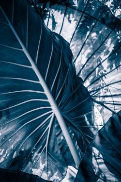 Magdalena Wasiczek close up of blue tropical leaves