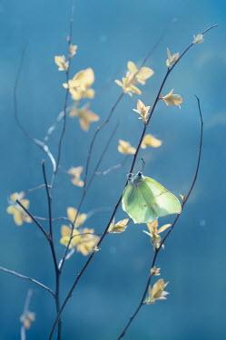 Magdalena Wasiczek Butterfly on branch