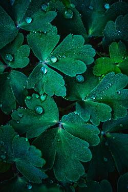 Magdalena Wasiczek Water droplets on leaves