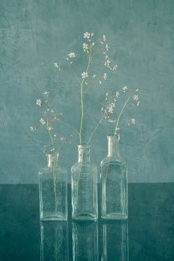 Liz Dalziel DELICATE WHITE FLOWERS IN THREE GLASS BOTTLES Flowers