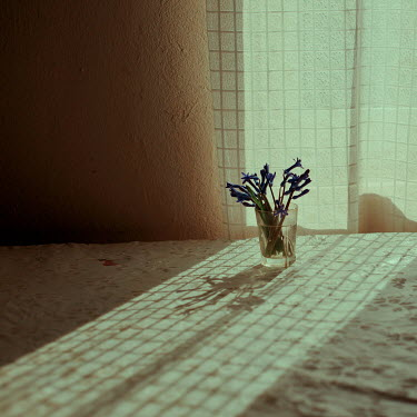 Felicia Simion FLOWERS IN GLASS ON TABLE WITH REFLECTION OF CURTAIN Flowers