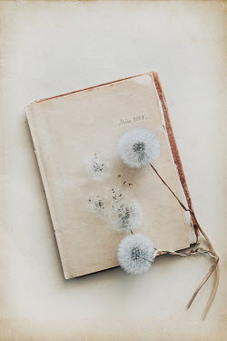 Magdalena Wasiczek DANDELION SEEDS LYING ON HISTORICAL DIARY Flowers