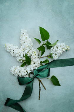 Magdalena Wasiczek WHITE FLOWERS TIED WITH GREEN SILK BOW Flowers