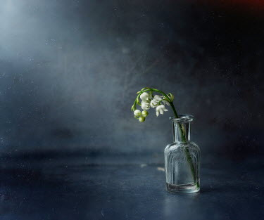 Andreeva Svoboda WHITE FLOWERS IN SMALL GLASS BOTTLE Flowers