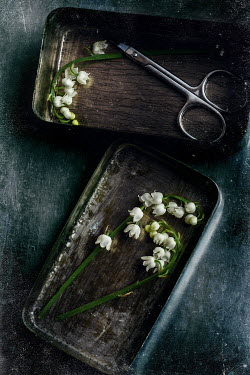 Andreeva Svoboda WHITE FLOWERS IN METAL TIN WITH SCISSORS Flowers