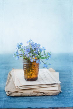 Magdalena Wasiczek BLUE FLOWERS IN GLASS ON OLD LETTERS Flowers