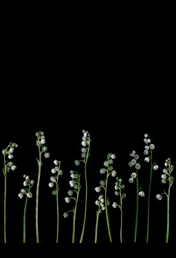Magdalena Wasiczek LINE OF WHITE FLOWERS IN SHADOW Flowers