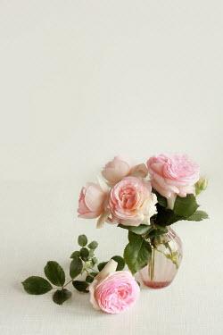 Jasenka Arbanas PINK ROSES WITH GLASS VASE Flowers