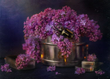 Andreeva Svoboda Shiny beetle and pink flowers