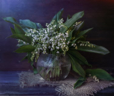 Andreeva Svoboda Lily of the valley in vase