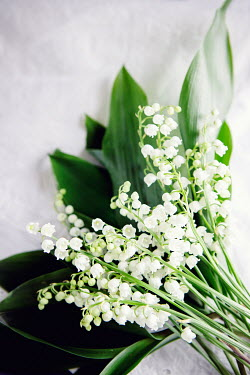 Isabelle Lafrance Bouquet of lily of the valley