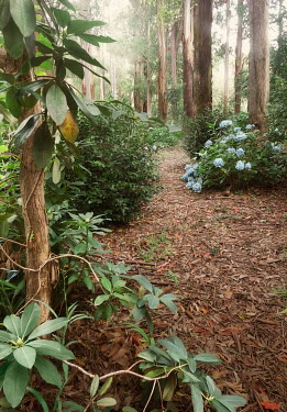 ILINA SIMEONOVA Path in forest