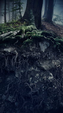 Andrei Cosma MOSSY TREE AND ROOTS IN COUNTRYSIDE Trees/Forest