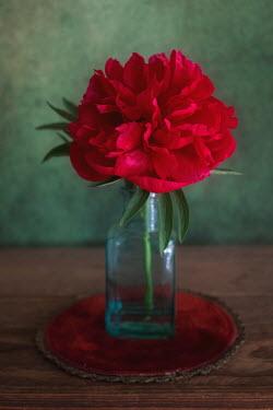 Magdalena Wasiczek RED FLOWER IN GLASS BOTTLE ON MAT Flowers